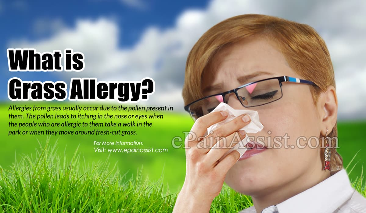 What is Grass Allergy?