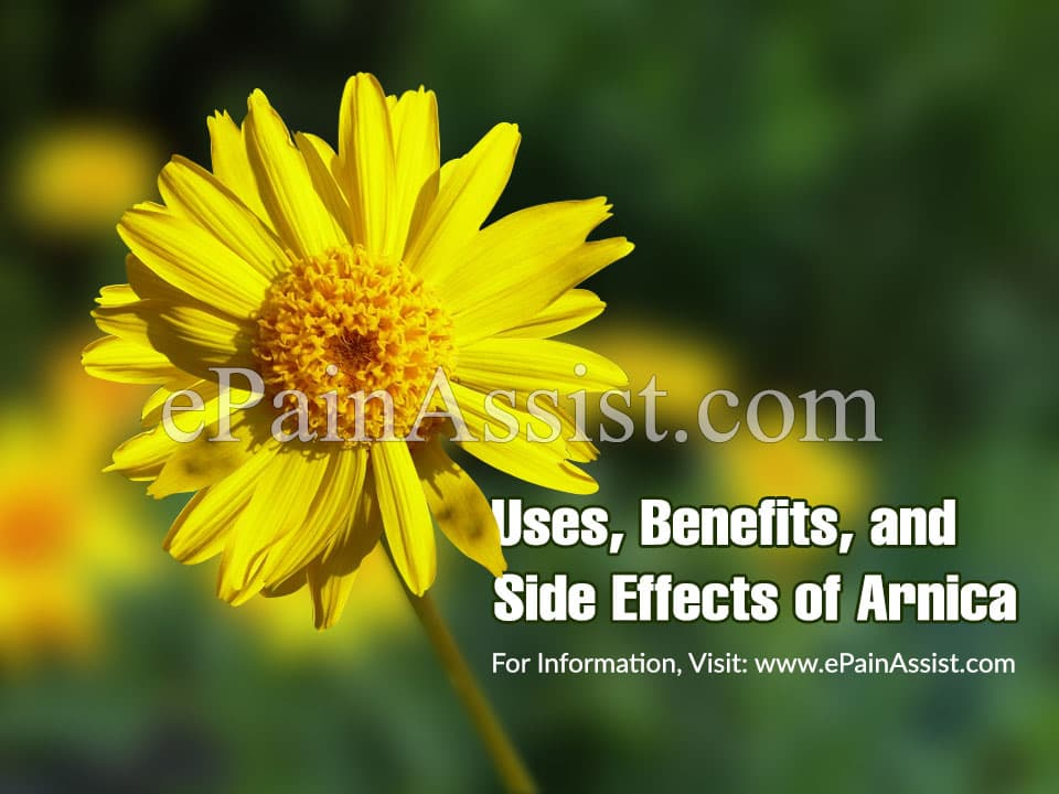 Uses, Benefits, and Side Effects of Arnica