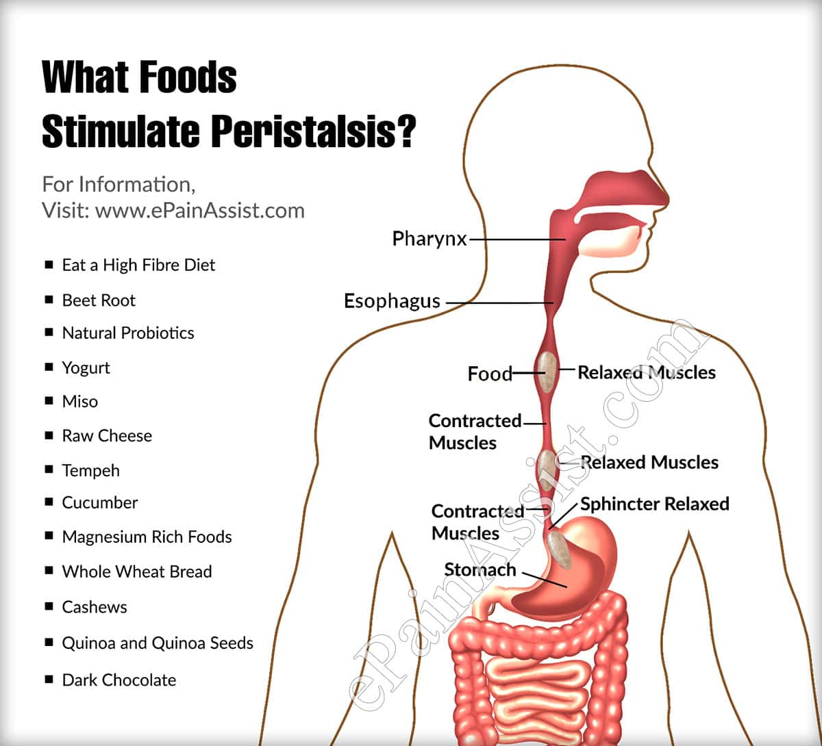 What Foods Stimulate Peristalsis?