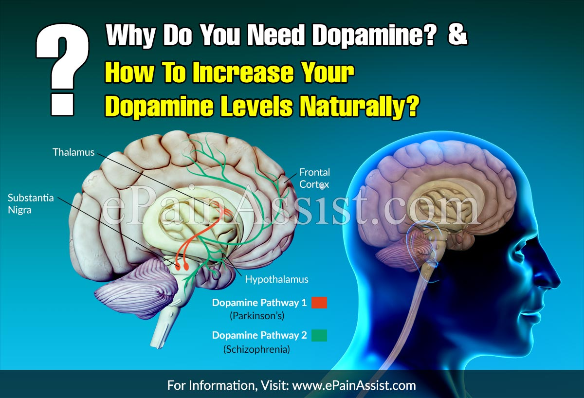 Why Do You Need Dopamine & How To Increase Your Dopamine Levels Naturally?