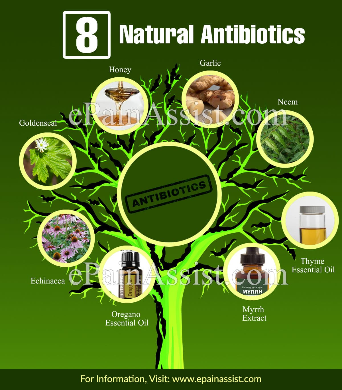 8 Natural Antibiotics