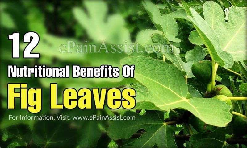 12 Nutritional Benefits Of Fig Leaves