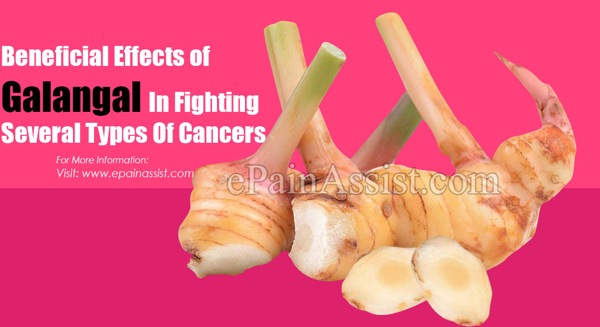 Beneficial Effects of Galangal In Fighting Several Types Of Cancers