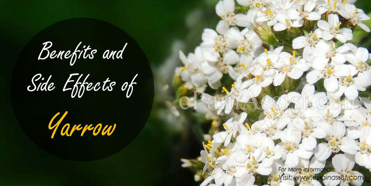 Benefits and Side Effects of Yarrow