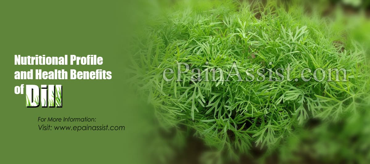 Nutritional Profile and Health Benefits of Dill