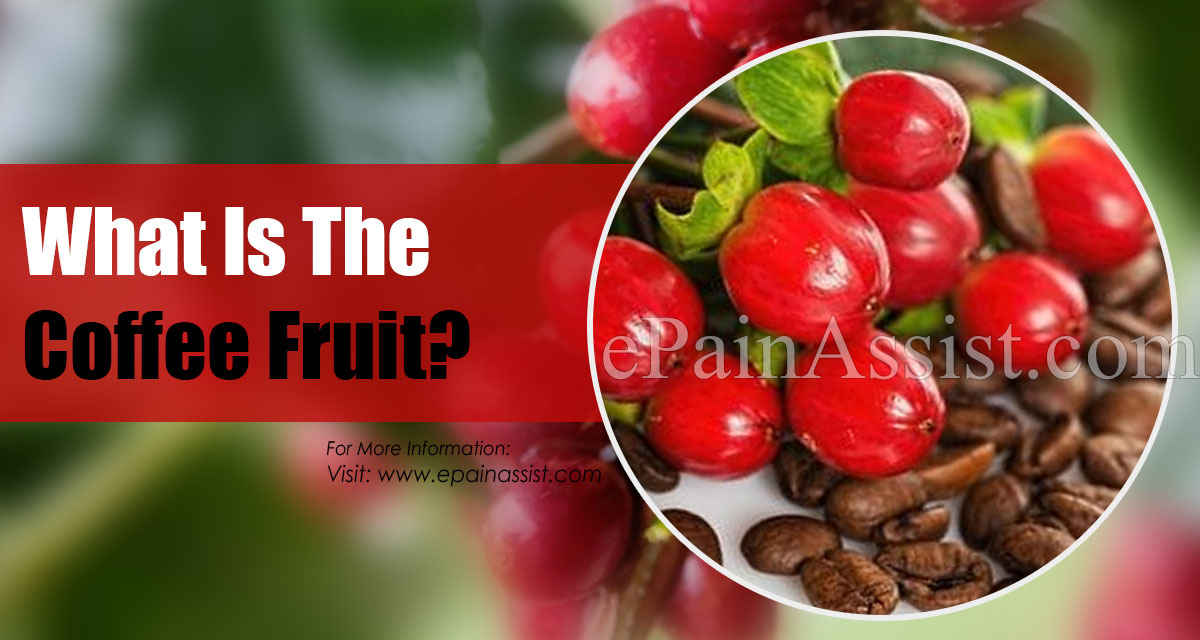 What Is The Coffee Fruit?
