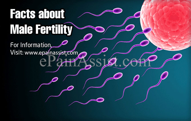 Facts about Maintaining and Improving Male Fertility