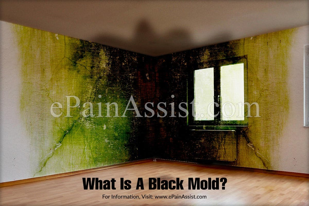 What Is A Black Mold?