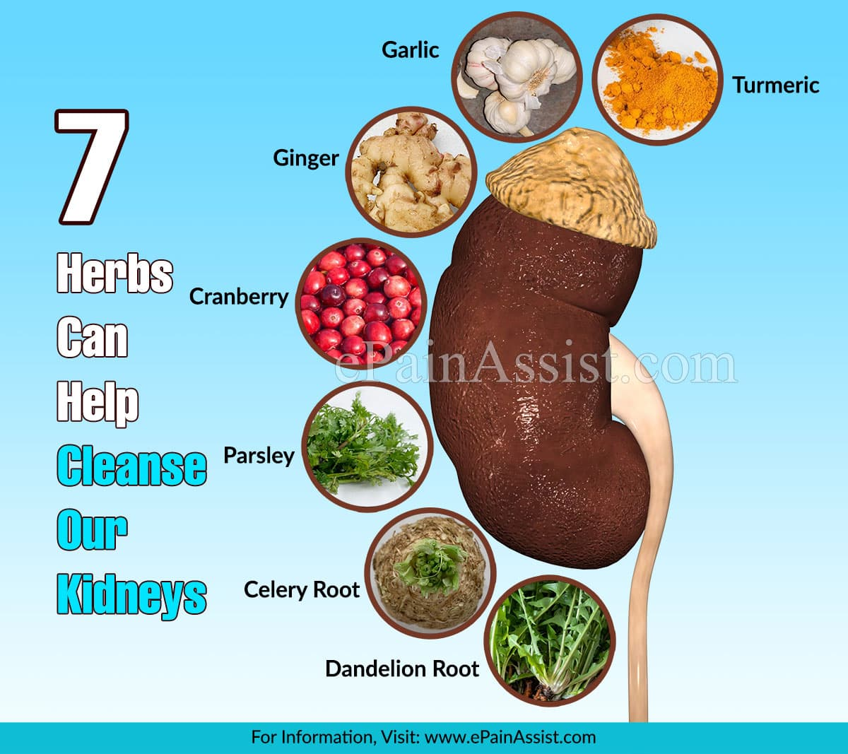 These 7 Herbs Can Help Cleanse Our Kidneys