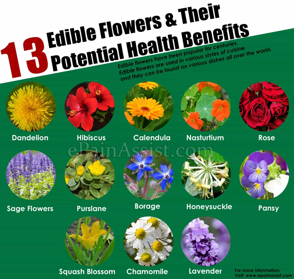 13 Edible Flowers & Their Potential Health Benefits
