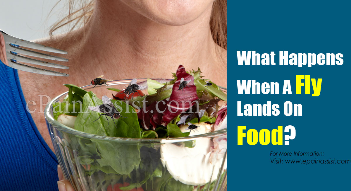 What Happens When A Fly Lands On Food?