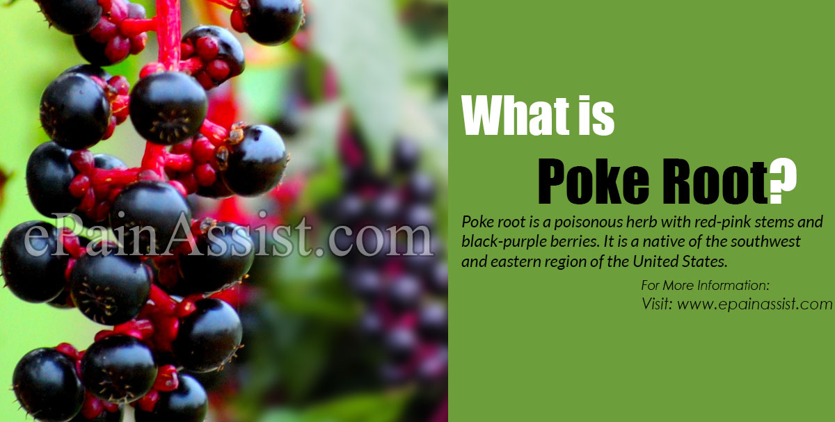 What is Poke Root?