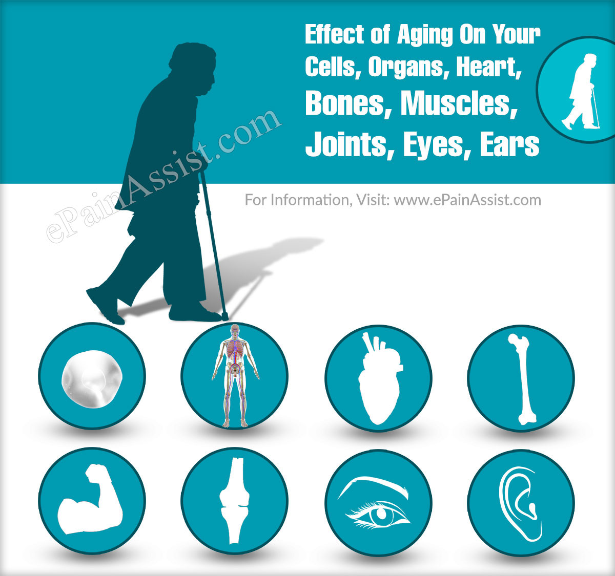 Effect of Aging On Your Cells, Organs, Heart, Bones, Muscles, Joints, Eyes, Ears