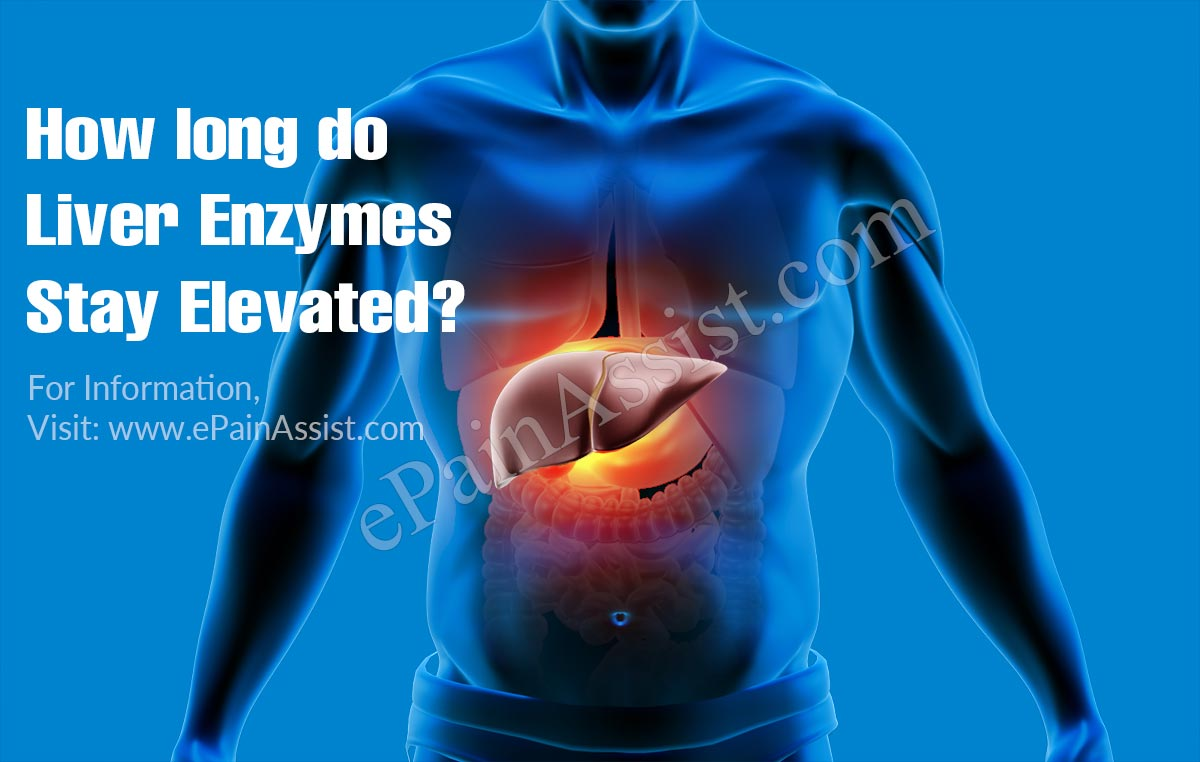 How Long Do Liver Enzymes Stay Elevated?