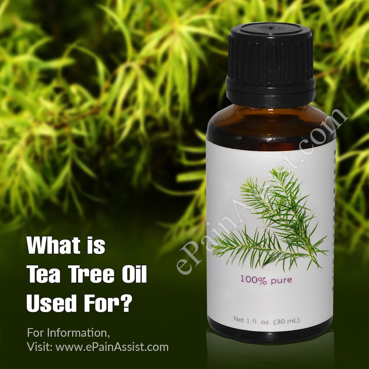 What Is Tea Tree Oil Used For?