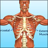 Intercostal Muscle Sprain: Causes, Symptoms, Diagnosis, Treatment- Conservative, Medications