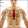 Pain in Sternum: Causes, Symptoms, Treatment
