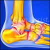 Understanding Ankle Joint: Know About the Supporting Ligaments, Tendons, Muscles