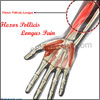 Flexor Pollicis Longus Pain: Causes, Symptoms, Treatment