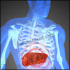 Liver Damage or Liver Failure: Causes, Signs, Symptoms, Prevention
