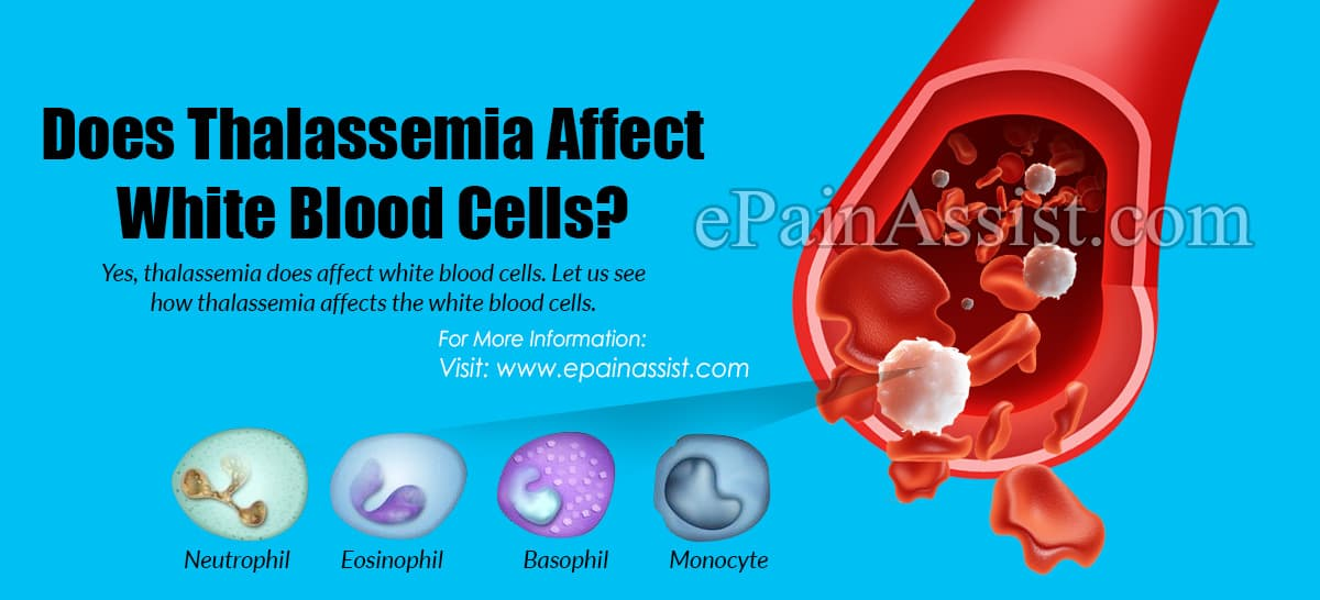 Does Thalassemia Affect White Blood Cells?