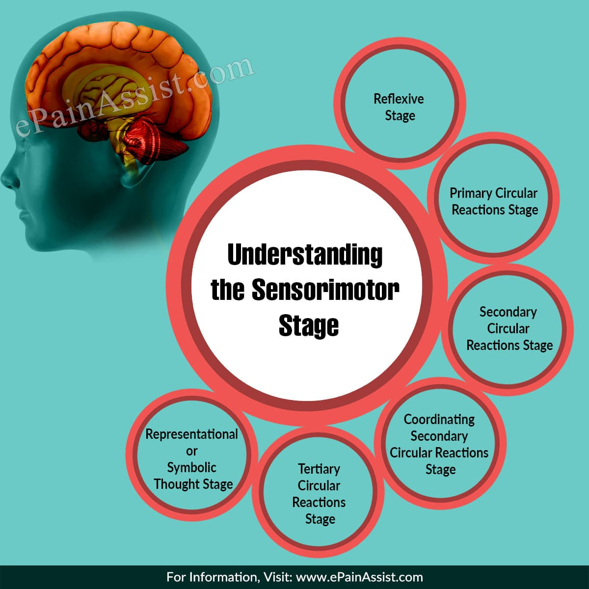 Understanding the Sensorimotor Stage