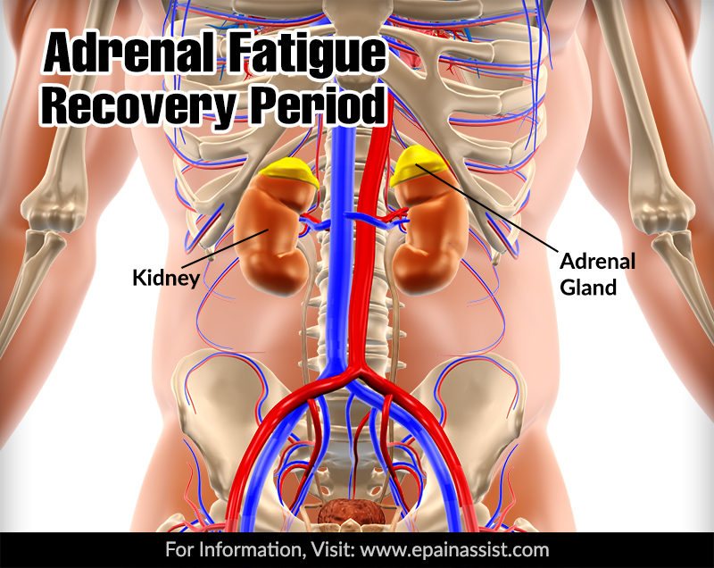 Adrenal Fatigue Syndrome Recovery Period