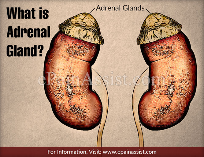 What is Adrenal Gland?
