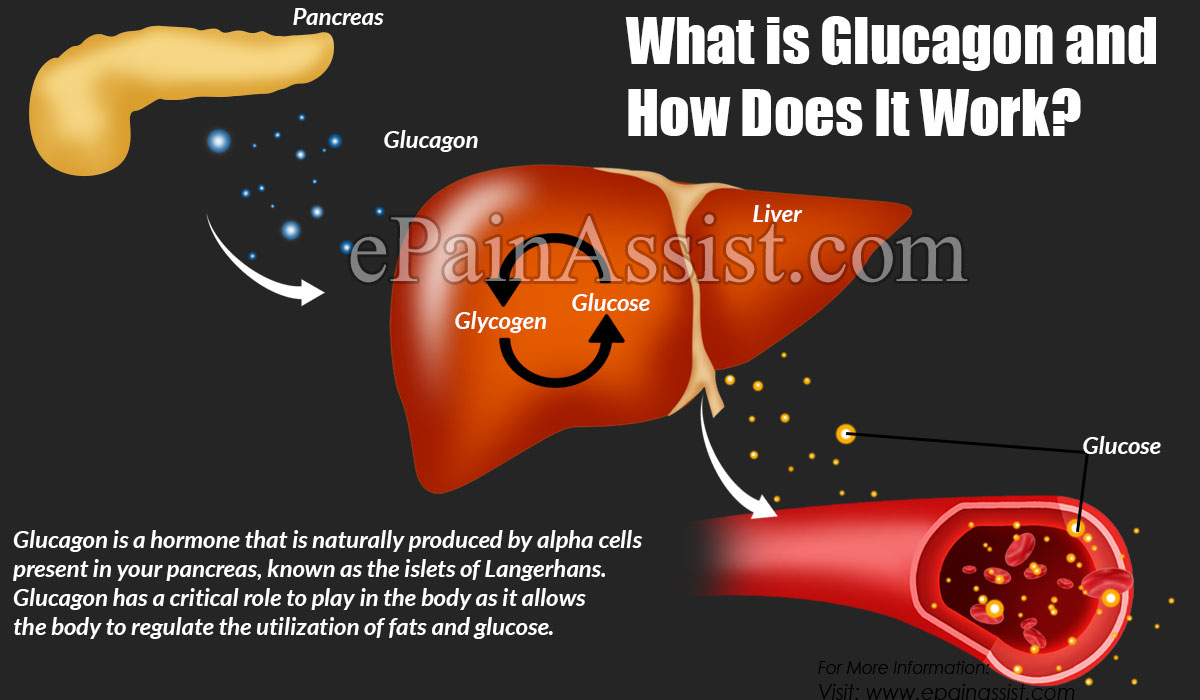 What is Glucagon and How Does It Work?