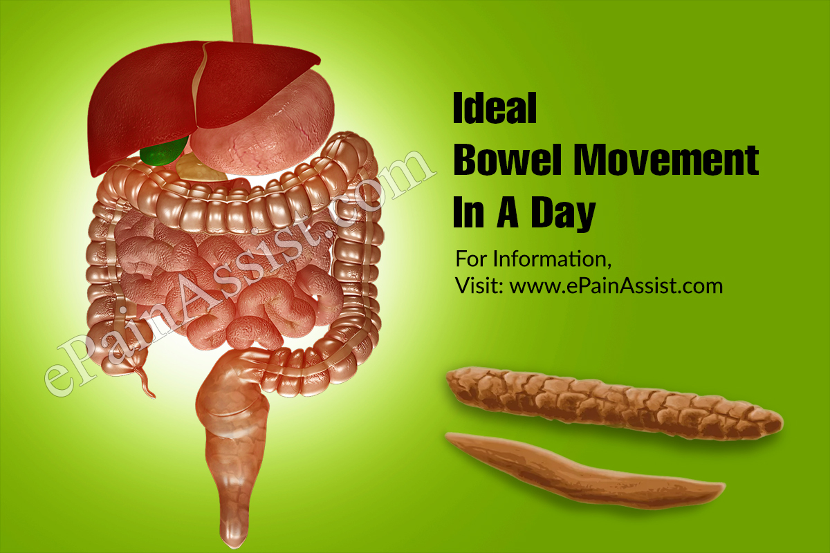 Ideal Bowel Movement In A Day