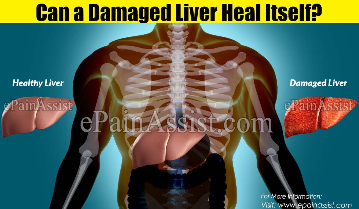 Can a Damaged Liver Heal Itself?