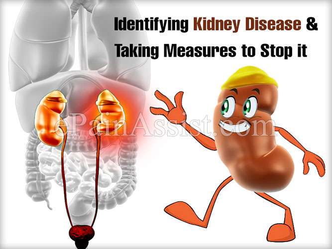 Identifying Kidney Disease & Taking Measures to Stop it