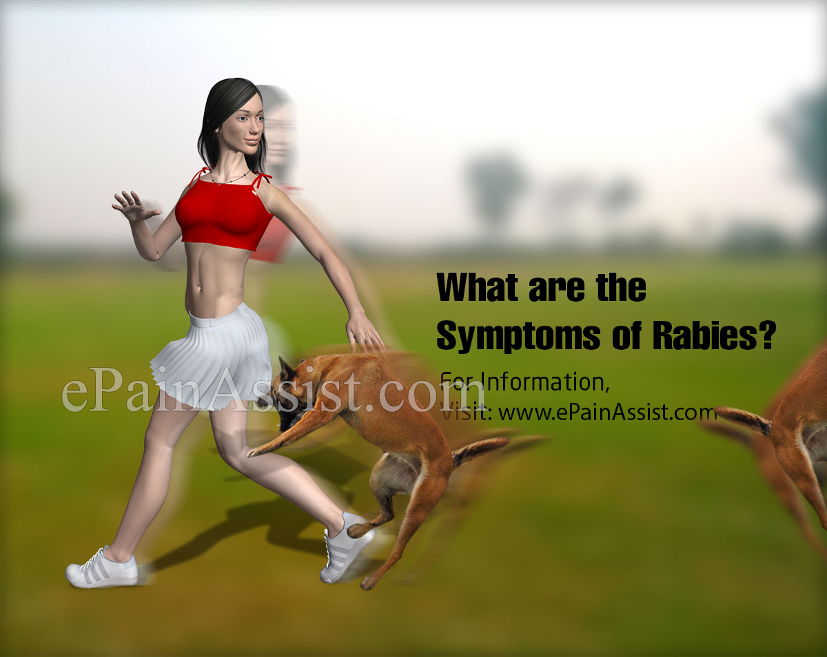 What are the Symptoms of Rabies?
