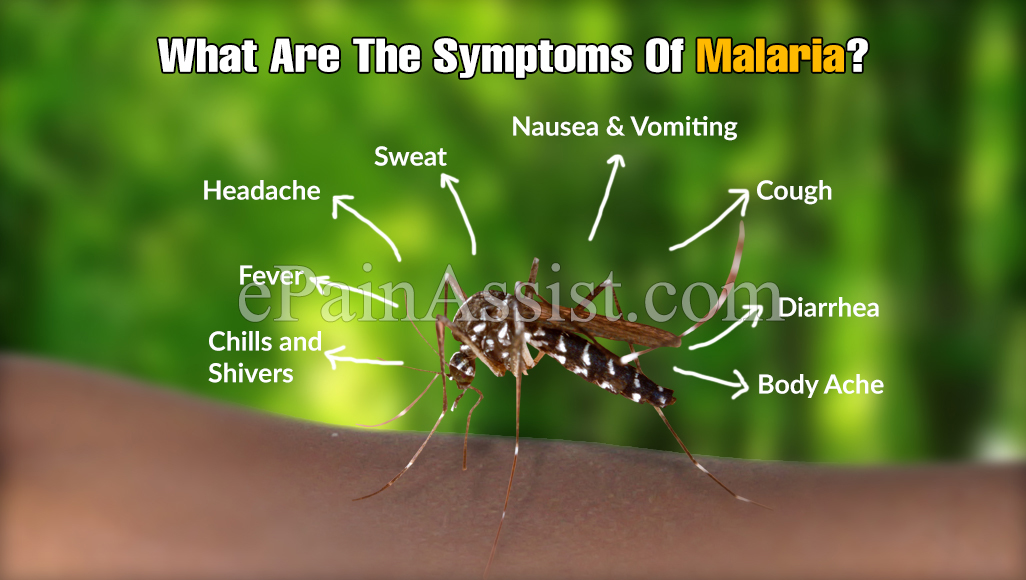What Are The Signs And Symptoms Of Malaria?