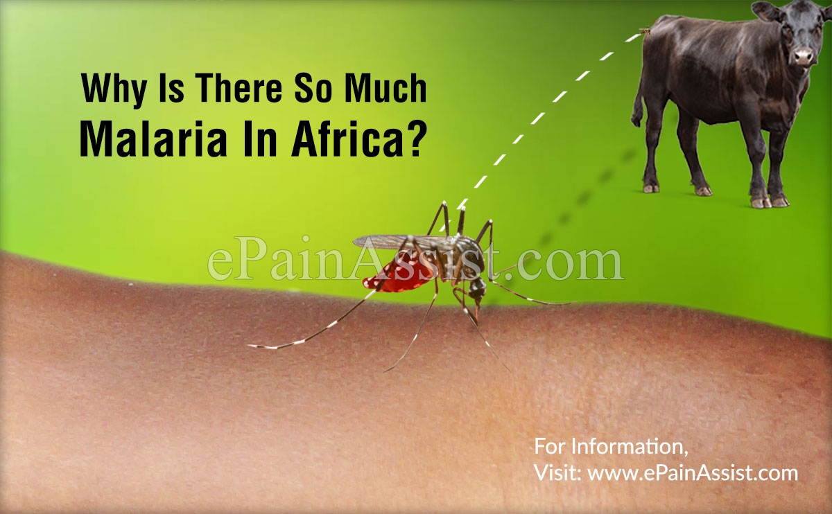 Why Is There So Much Malaria In Africa?