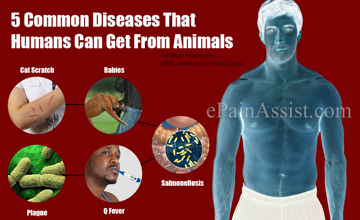 5 Common Diseases That Humans Can Get From Animals