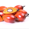 10 Astonishing Benefits Of Palm Kernel Oil