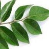 How To Get Healthy Skin With Curry Leaves?