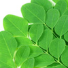 How to Use Moringa For Skin and Hair Health?