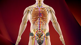 What is Overactive Immune System: Causes, Symptoms, Treatment
