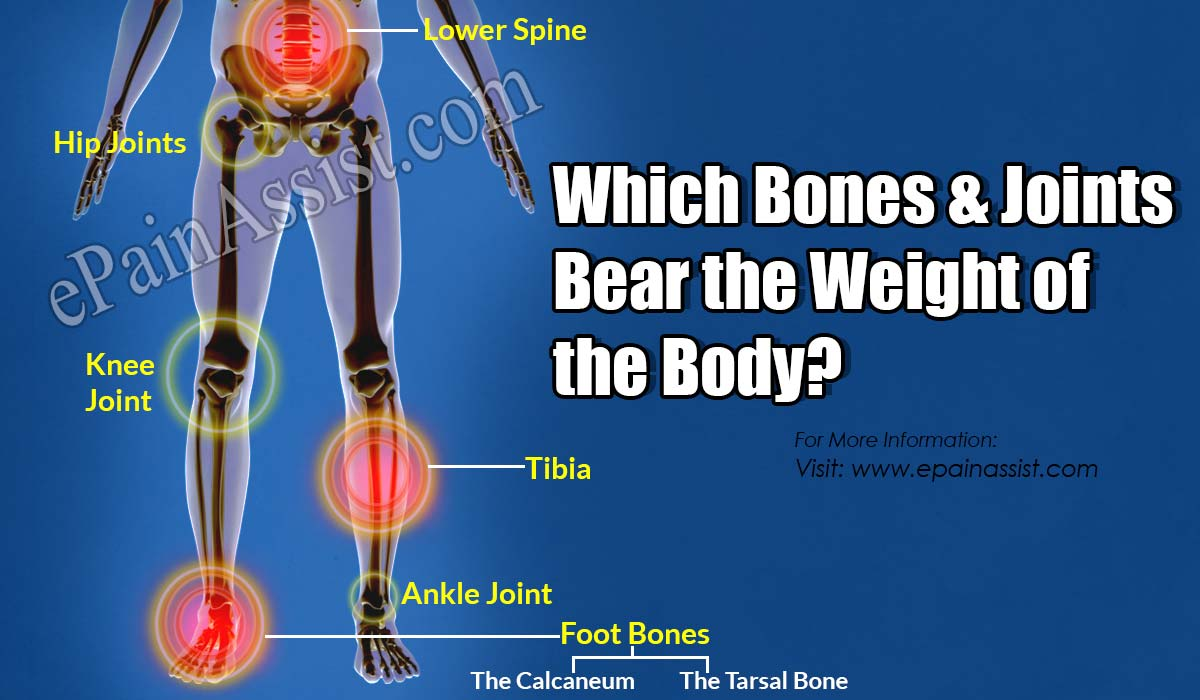 Which Bones Bear The Weight Of The Body?