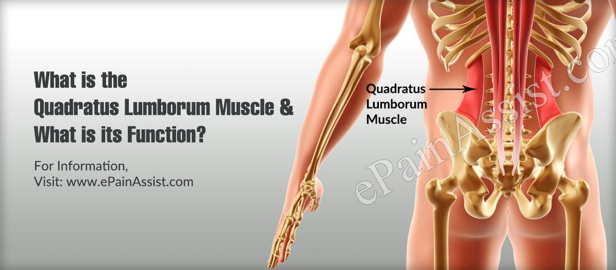 Quadratus Lumborum Muscle Function & Its Stretches