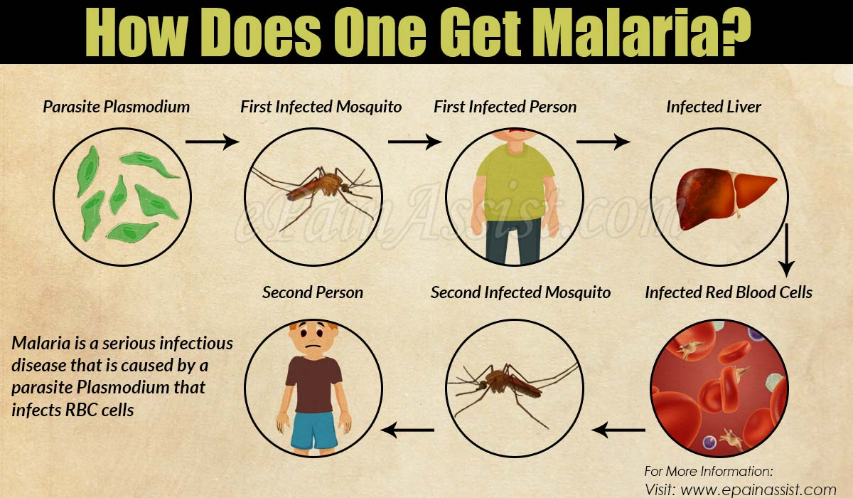How Does One Get Malaria?
