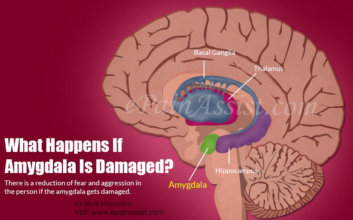 What Happens If Amygdala Is Damaged?