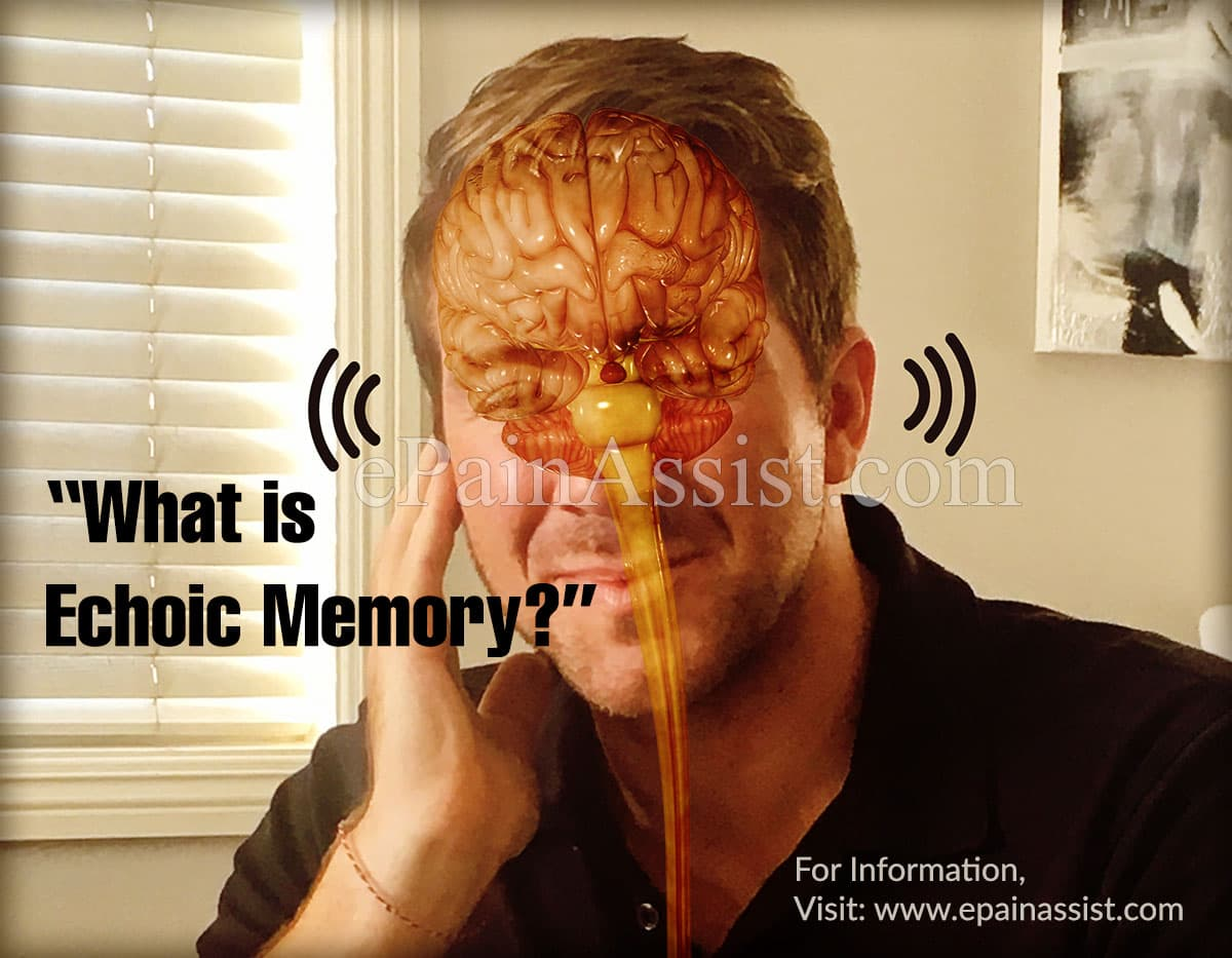 What is Echoic Memory?