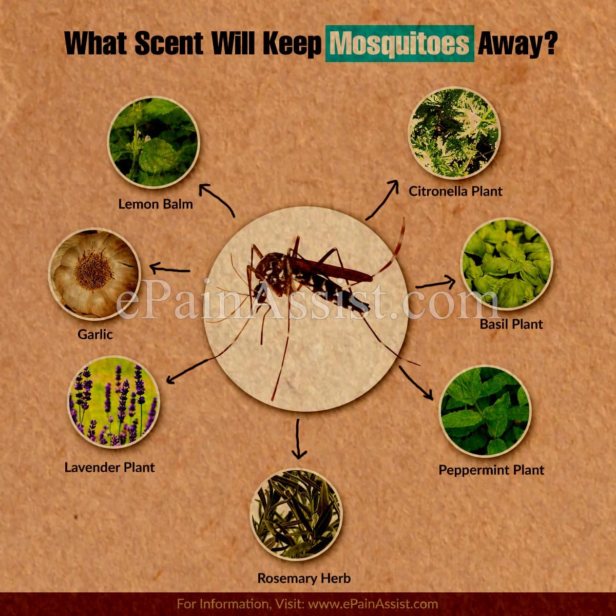 What Scent Will Keep Mosquitoes Away?
