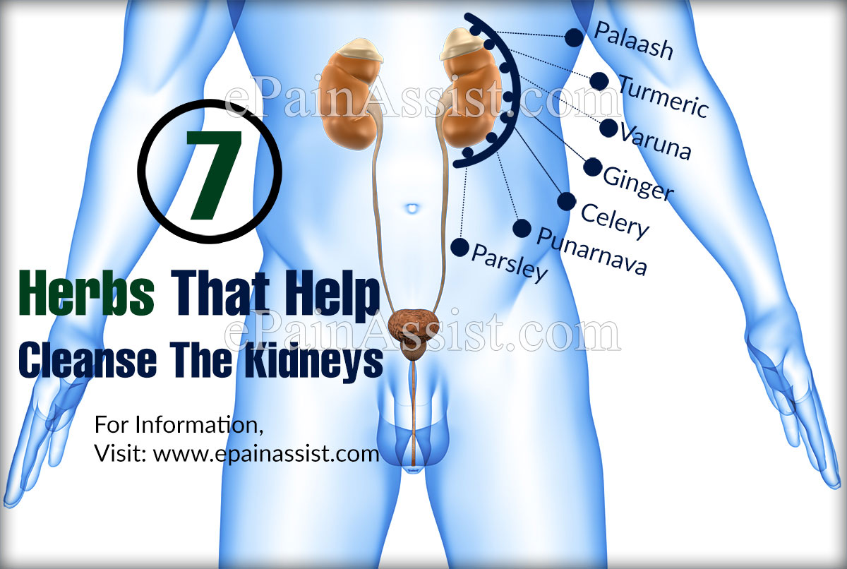7 Herbs That Help Cleanse The Kidneys?