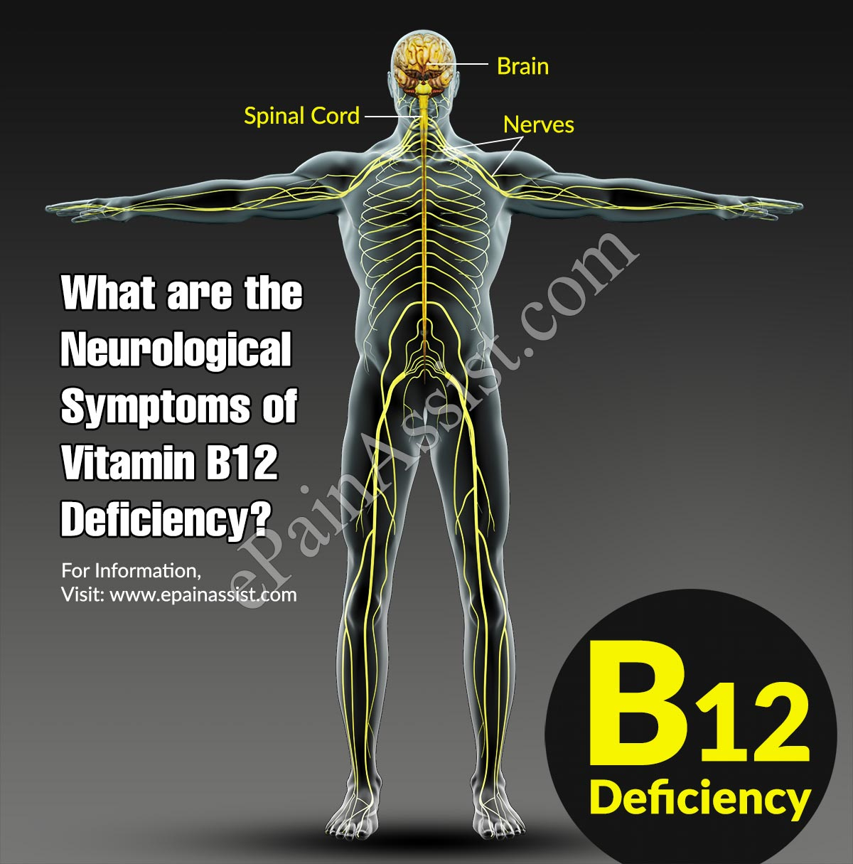 What are the Neurological Symptoms of Vitamin B12 Deficiency?