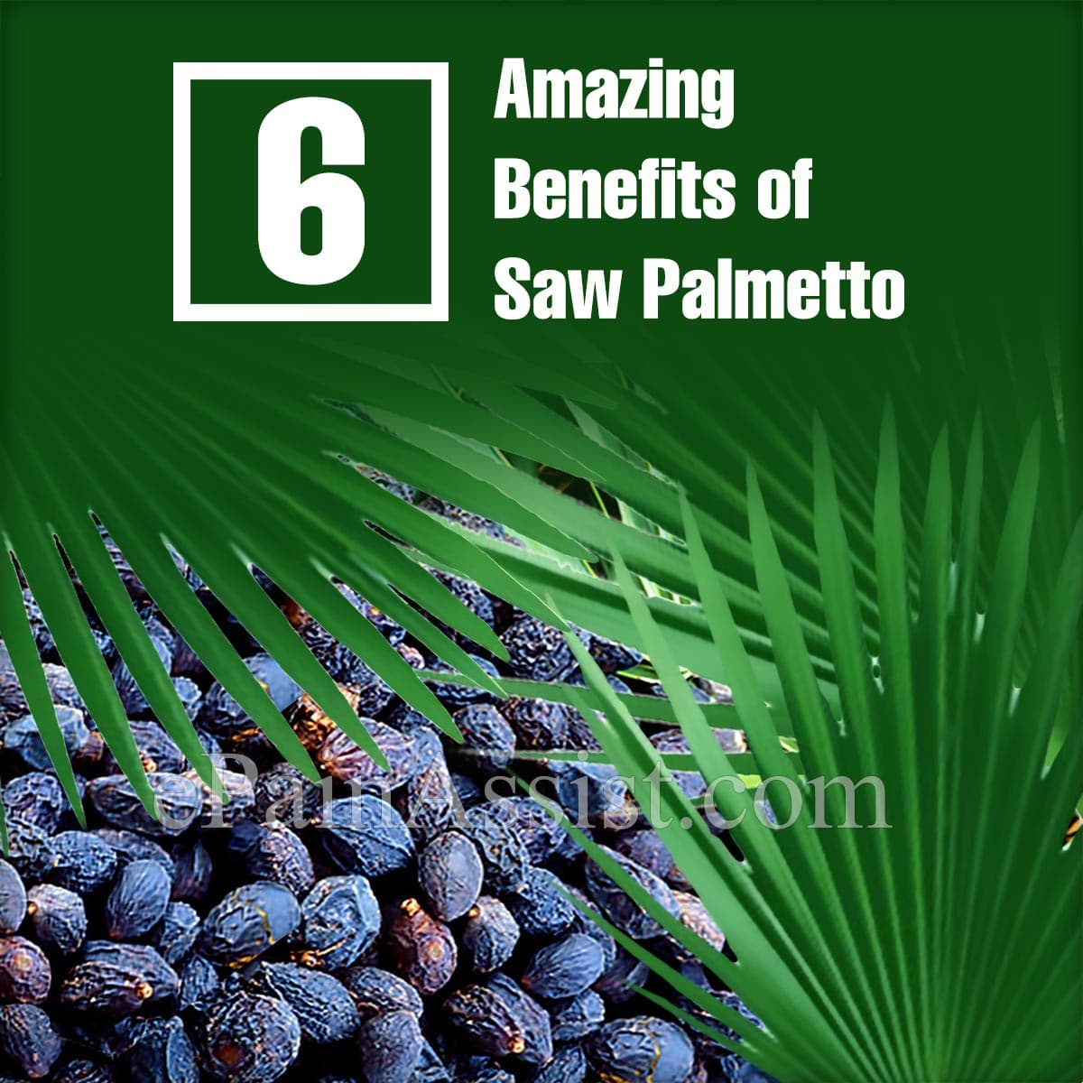 6 Amazing Benefits of Saw Palmetto