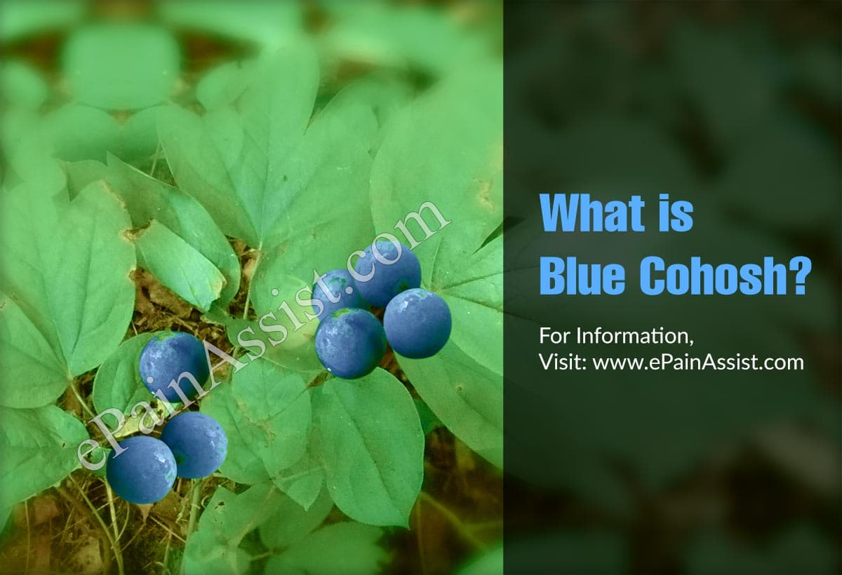 What is Blue Cohosh?